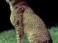 1970 Zoo Basel