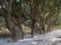 Chios im Süden