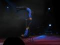 Zirkus Knie 2008