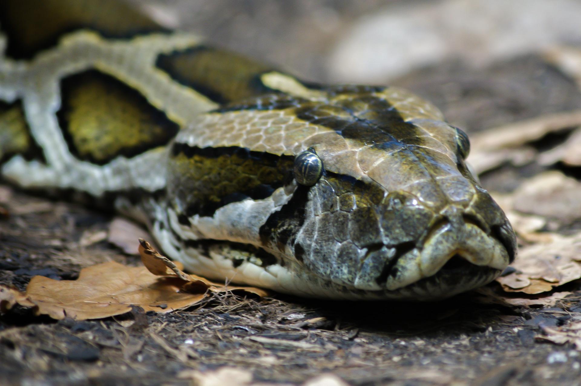 2012 Python